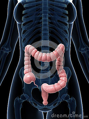 Desktop_intestino-grueso-30725704