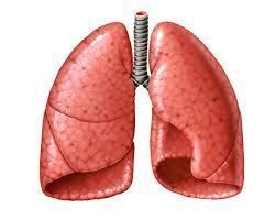 Desktop_pulmones