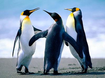 Desktop_penguins