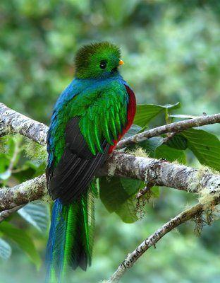 Desktop_quetzal