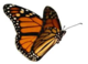 Thumb_butterfly