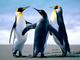 Thumb_penguins
