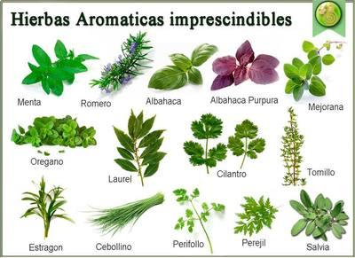 Evaluaci n tema las plantas quiz - Plantas aromaticas en la cocina ...