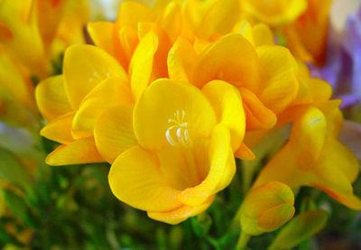 Desktop_flores-amarillas-9