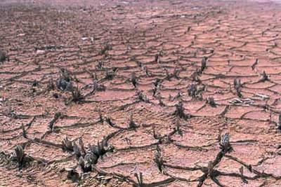 Desertifica__o1