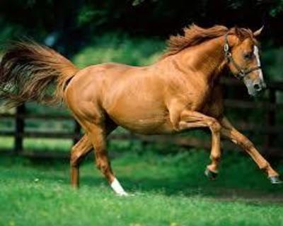 Desktop_caballo