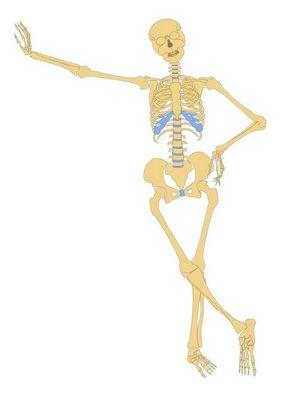 Desktop_esqueleto-humano